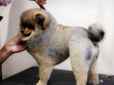 Why Choose Mobile Grooming Over Salon Grooming?